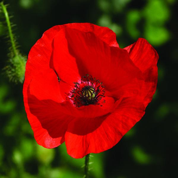 Remembrance Sunday Services 10 November 2019